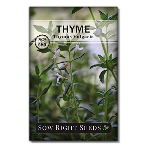 Sow Right Seeds - Thyme Seed for Planting - All Non-GMO Heirloom Thyme Seeds with Full Instructions for Easy Planting and Growing Your Kitchen Herb Garden, Indoor or Outdoor; Great Gift